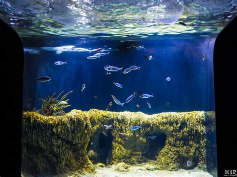 aquarium banyuls sur mer aquarium de banyuls sur mer 6290487 made in perpignan