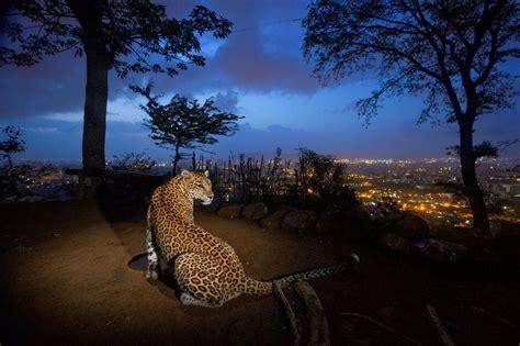 people  wildlife  india national geographic society