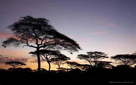 serengeti national park national park  tanzania