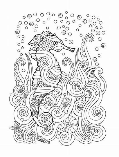 Seahorse Sea Under Zentangle Sketch Coloring Drawn