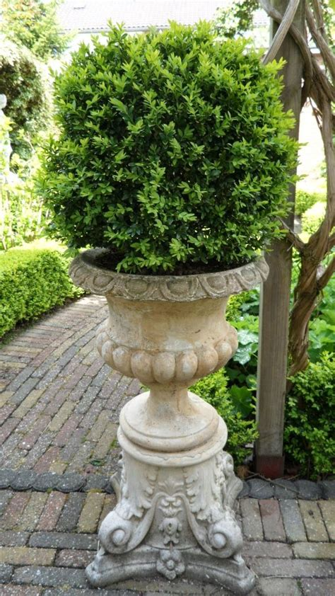 Outdoor Vases And Urns by Vase With Boxwood Urn Containers Outdoor