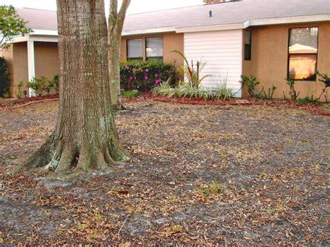 Backyard Grass by America S Most Desperate Landscape 2010 Landscape Tips