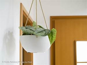 Bambus Pflege Zimmerpflanze : der h ngende indoor garten wo blumenbilder wachsen ~ Michelbontemps.com Haus und Dekorationen