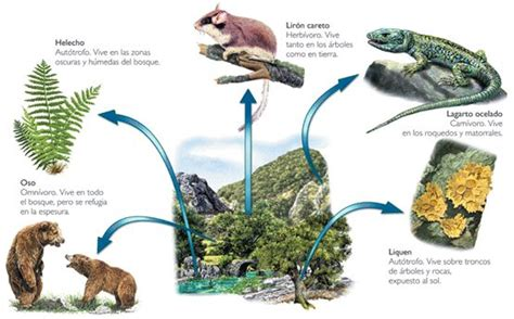 habitat si e social la adaptación de los seres vivos al medio te interesa saber