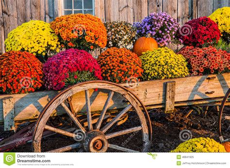 fall mums fall scene stock image image of vegetables scene colors 46841925