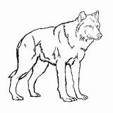 Coloring Wolf Printable Colouring Popular sketch template