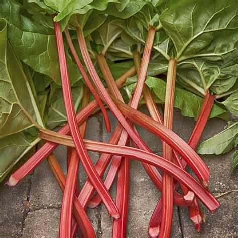 cuisiner de la rhubarbe rhubarbe planter et cultiver ooreka