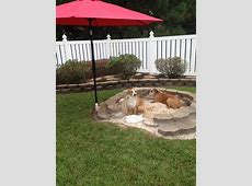 Backyards For Dogs neriumgbcom