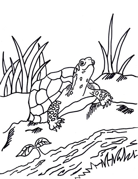 Box Turtle Coloring Sheet Wwwimgkidcom The Image Kid
