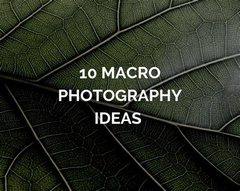 photography   iris
