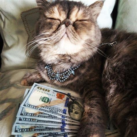 bunch  selfies  ballin cats  riches