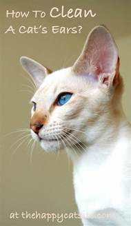 how to wash a cat how to clean cats ears a step by step guide