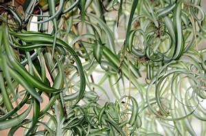Pflanzen Für Wenig Licht : zimmerpflanzen bei wenig licht diese 5 wachsen im schatten ~ Sanjose-hotels-ca.com Haus und Dekorationen