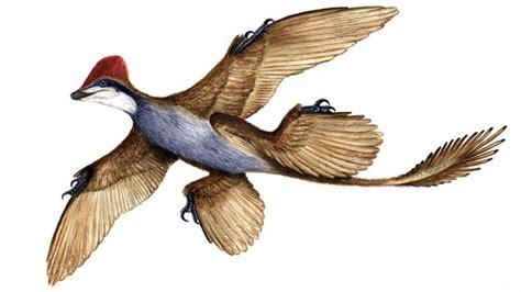 Lucertole Volanti by El Sorprendente Dinosaurio Volador De Cuatro Alas