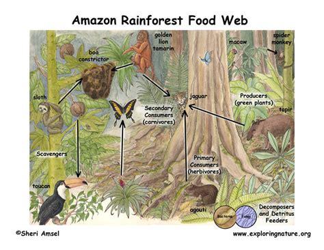 amazon cuisine alchemistclub forest ecosystem