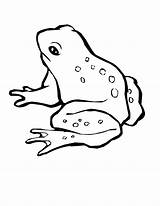 Frog Coloring Tree Animals Piggy Miss Printable Drawing Sheets Hop Colouring Magnificent Animal Drawings Wildlife Draw Getdrawings Activity Eyed Getcolorings sketch template