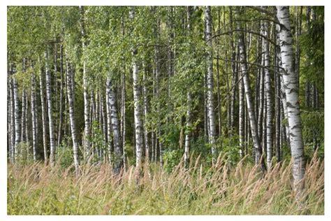 Pasaule mums apkārt mainās, un mežsaimniecībai jāmainās ...