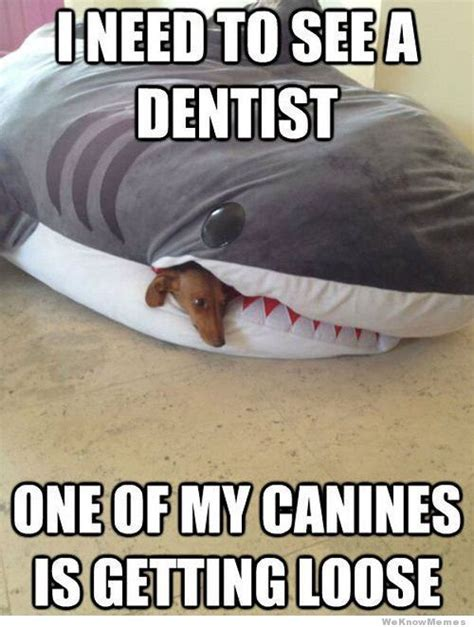I Need To See A Dentist   WeKnowMemes