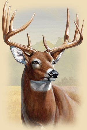whitetail deer facts information
