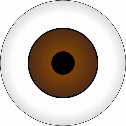 Eye Brown Clip Olhos Vector Castanhos Svg