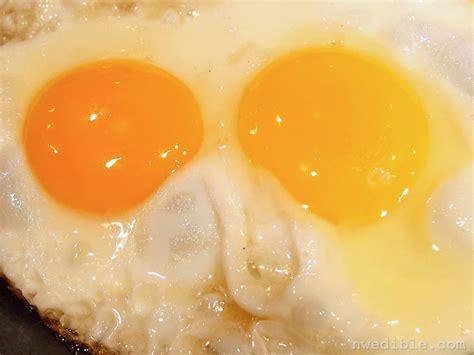 Backyard Eggs by Backyard Eggs Vs Store Bought Eggs A Side By Side