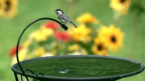 wild birds unlimited drip  mist youtube