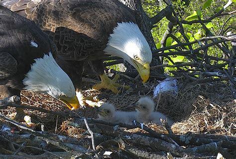 wildlife cams youre guaranteed  love