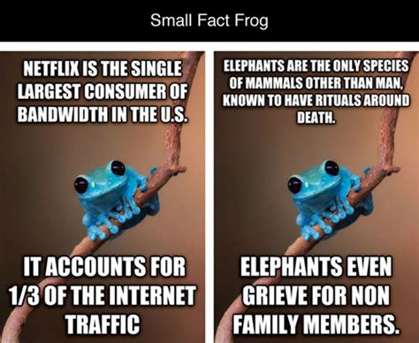 Fact Frog Meme - small fact frog is the best advice animal meme