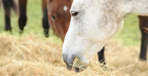 Pferd Hustet Trocken