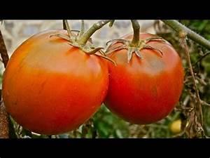 Tomaten Düngen Hausmittel : tipps f r eine kartoffel pyramide doovi ~ Whattoseeinmadrid.com Haus und Dekorationen
