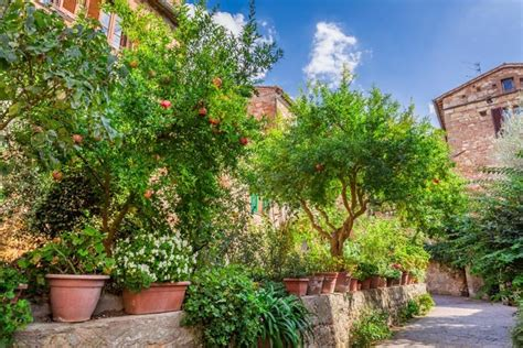 mediterranean plants and trees image gallery mediterranean shrubs