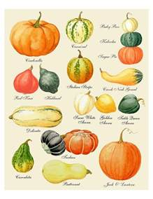 Varieties Of Pumpkins In Australia pumpkin print pumpkin art pumpkin chart print