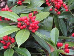Schattenpflanzen Garten Winterhart : pflanzen kaufen balkonpflanzen zimmerpflanzen ~ Lizthompson.info Haus und Dekorationen