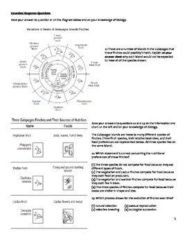 high school biology worksheet evolution by educator super store