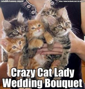 Crazy Cat Lady Meme - flower jokes kappit