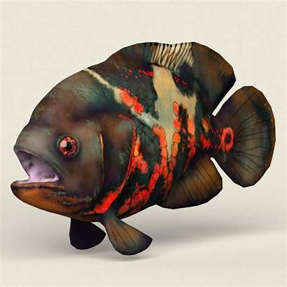 Oscar Fish 3d Wallpapers Realistic Poly Low