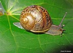 Image result for garden snails