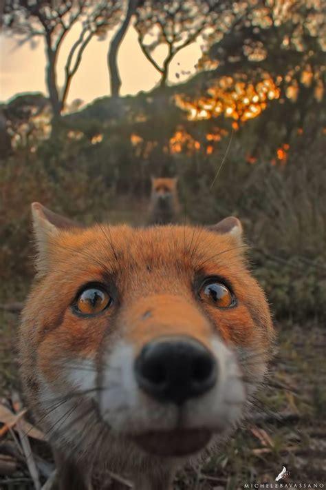 fear  palatable   foxs eyes  hes