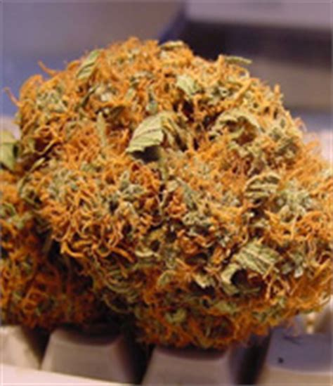 red hair   everthing      weed
