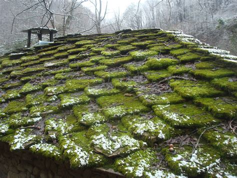 How To Prevent Moss From Growing On The Roof How To Repair A Hole In My Garage Roof Patching Leaking Metal Roofing Tiles Types Uk Flat Tar Paper Rooftop Gardens Kensington Wedding Queen Elizabeth Hall Garden Bar Menu Rubber That Look Like Slate Menards Installation Instructions
