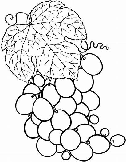 Coloring Fruit Pages Printable Vegetable Nutrition