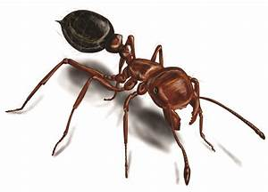 Ant Pictures