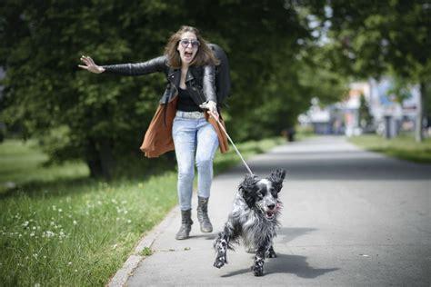 dog trainer teach  dog  stop pulling  leash