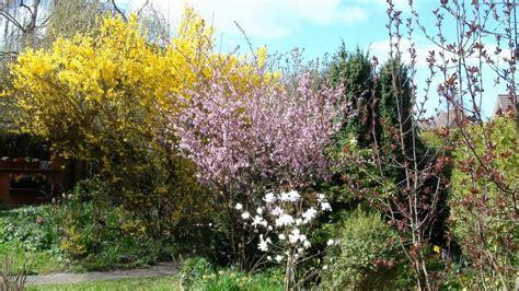 Mein Garten Frühling 2013 Blumen Und Musik Full Hd Youtube