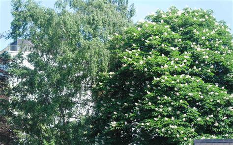 Besondere Bäume Für Den Garten by Die 103 Besten Fr 252 Hlingsbilder Hintergrundbilder