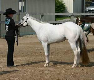 1000+ images about Pony Of The Americas (POA) Ref on ...