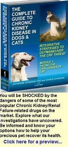 Pet U0026 39 S Kidney Disease  What Veterinarians Won U0026 39 T Tell You