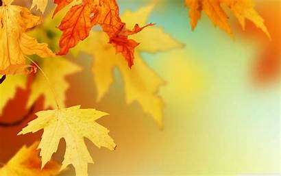 Autumn Leaves Natural Water Awesome