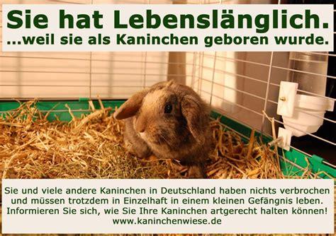 kaninchen in der wohnung kaninchen kleine tiere mit gro 223 en anspr 252 chen theodora brand tierheim