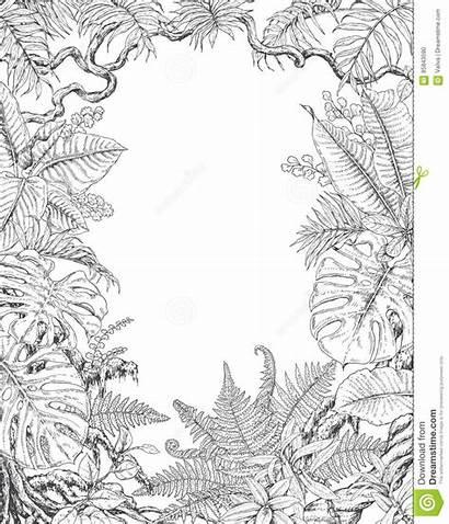 Piante Fern Monstera Disegnata Struttura Tropicali Mano